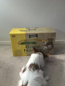 dogfood2