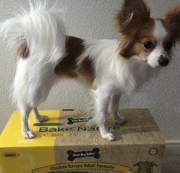 dogfood6